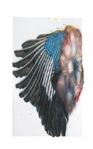 Großer Eichelhäherflügel – Dietmar Ullrich